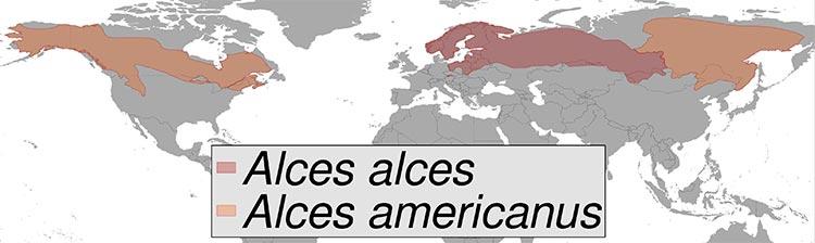 Schéma de répartition des espèces d'élans sur la planète